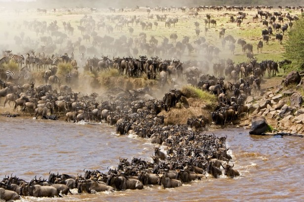 7-Days-Serengeti-Wildebeest-Migration-Safari6-1024x682